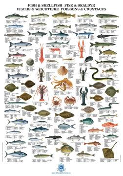 """Bilde av Fiskeplakat """"Fisk og skalldyr"""""""